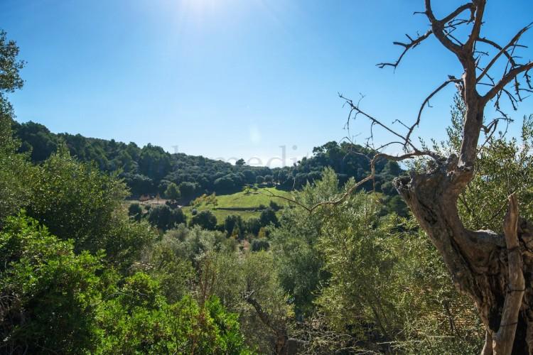 Property for Sale in Mancor de la Vall, Mancor de la Vall, Islas Baleares, Spain